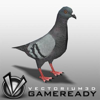 3D Model Download - Low Poly Animals - Pigeon